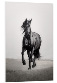 PVC-tavla  Horse Friesian in the steppe - Monika Leirich
