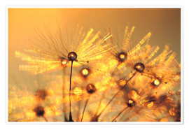 Premiumposter  Dandelion golden beads - Julia Delgado