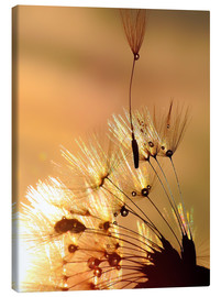 Canvastavla  Dandelion golden touch - Julia Delgado