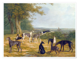 Premiumposter Nine Greyhounds in a Landscape