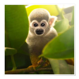 Premiumposter  baby monkey - Photoplace Creative