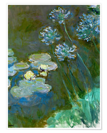 Premiumposter Nympheas et Agapanthes (Waterlillies a. Agapanthus)