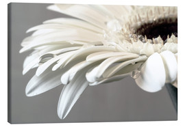 Canvastavla  White Gerbera with drops - Susanne Herppich
