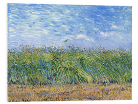 PVC-tavla  Wheat Field with a Lark - Vincent van Gogh