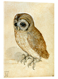 Akrylglastavla  The Little Owl - Albrecht Dürer