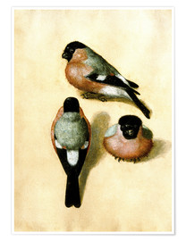 Poster Bullfinch studies