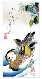Premiumposter Mandarin ducks