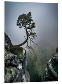 Akrylglastavla  Lonely Tree on the Brink - Andreas Wonisch