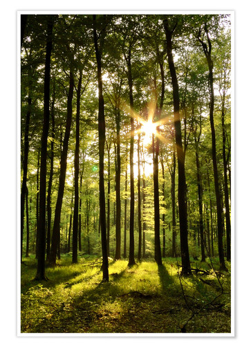Premiumposter Forest in Sunset