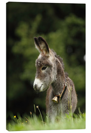 Canvastavla  little donkey - Uwe Fuchs
