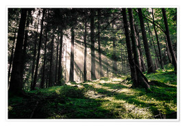 Premiumposter Light rays in the forest