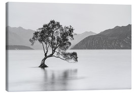 Canvastavla  Lone Tree / black & white - Sebastian Warneke