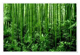 Premiumposter bamboo forest