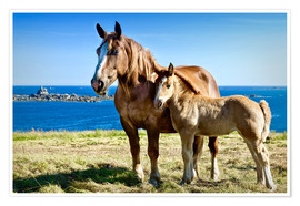 Premiumposter Horse and Foal