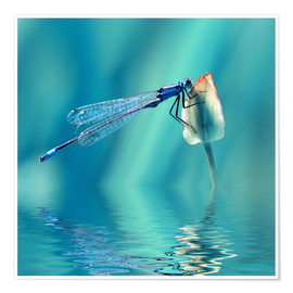 Premiumposter  Dragonfly with Reflection - Atteloi