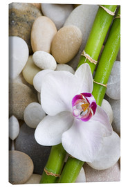 Canvastavla  Bamboo and orchid - Andrea Haase Foto