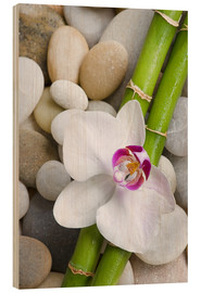 Trätavla  Bamboo and orchid - Andrea Haase Foto