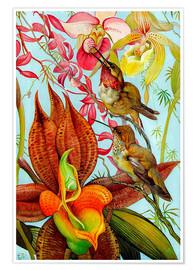 Premiumposter  Exotic birds on orchids