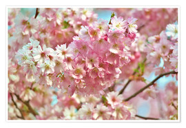 Premiumposter Spring cherry blossom image