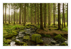 Premiumposter forest with creek
