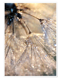 Poster  Dew on a dandelion - Julia Delgado