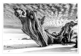Poster  Old tree root on the beach (monochrome) - Sascha Kilmer