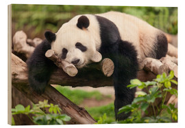 Trätavla  Giant panda sleeping - Jan Christopher Becke
