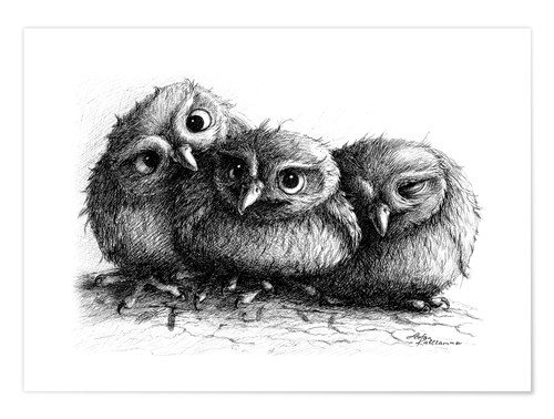 Premiumposter Three young owls - owlets