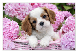 Premiumposter  Pup in Pink Flowers - Greg Cuddiford