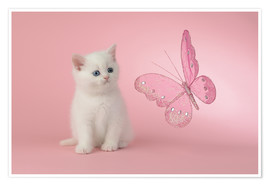 Premiumposter Kitten with Pink Butterfly