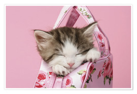 Premiumposter  Sleeping kitten in pink handbag - Greg Cuddiford