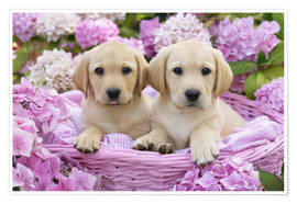 Premiumposter Labrador puppies in a basket