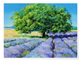 Premiumposter  Tree and Lavenders - Jean-Marc Janiaczyk