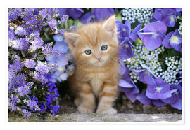Premiumposter  Ginger cat in flowers - Greg Cuddiford