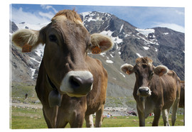 Akrylglastavla  Alpine cows in the mountains - Michele Molinari