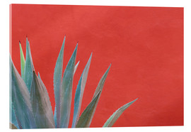 Akrylglastavla  Agave in front of red wall - Don Paulson