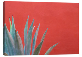 Canvastavla  Agave in front of red wall - Don Paulson