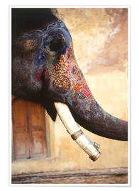 Premiumposter  Painted Indian elephant - Dave Bartruff