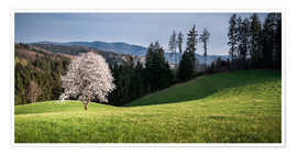 Premiumposter  Blooming Apple Tree in Black Forest - Andreas Wonisch