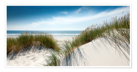 Premiumposter Dune with fine shining marram grass