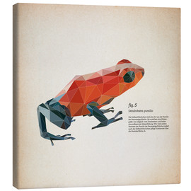 Canvastavla  fig5 polygon frog square - Labelizer