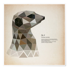 Premiumposter  fig4 Polygon meerkat  square - Labelizer