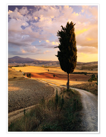 Poster  Evening in the Val d'Orcia, Tuscany - Matteo Colombo