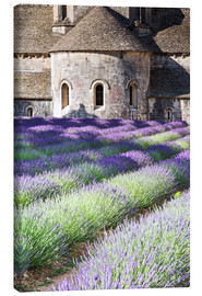 Canvastavla  Senanque abbey and lavender, Provence - Matteo Colombo