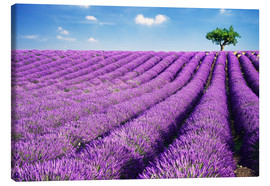Canvastavla  Lavender field and tree - Matteo Colombo
