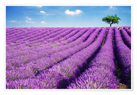 Premiumposter  Lavender field and tree - Matteo Colombo