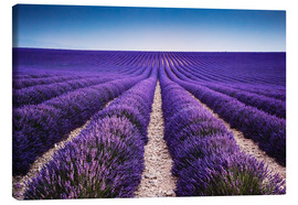 Canvastavla  Lavender field in Provence - Matteo Colombo
