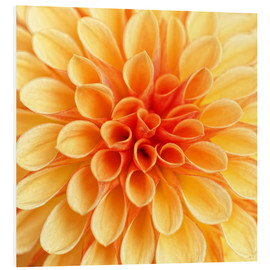 PVC-tavla  Yellow Dahlia - Martina Cross