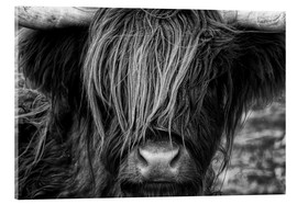 Akrylglastavla  Skotsk highland cattle - Martina Cross