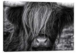 Canvastavla  Skotsk highland cattle - Martina Cross